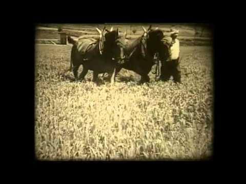 Landwirtschaft gestern: Ackerbau in der Schweiz um 1936