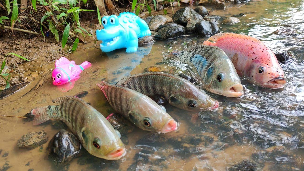 Hunting Red Tilapia In River, Shark, Koki Fish, Lobster, Crab - eps38