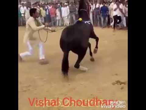 Dancer Ghodi