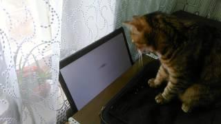 Кот играет в видеоигры на компьютере