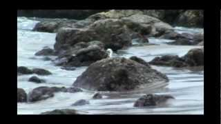 Video Los Pianos Barrocos - The Story Of three loves (Piano & Orchestra) download MP3, 3GP, MP4, WEBM, AVI, FLV November 2017