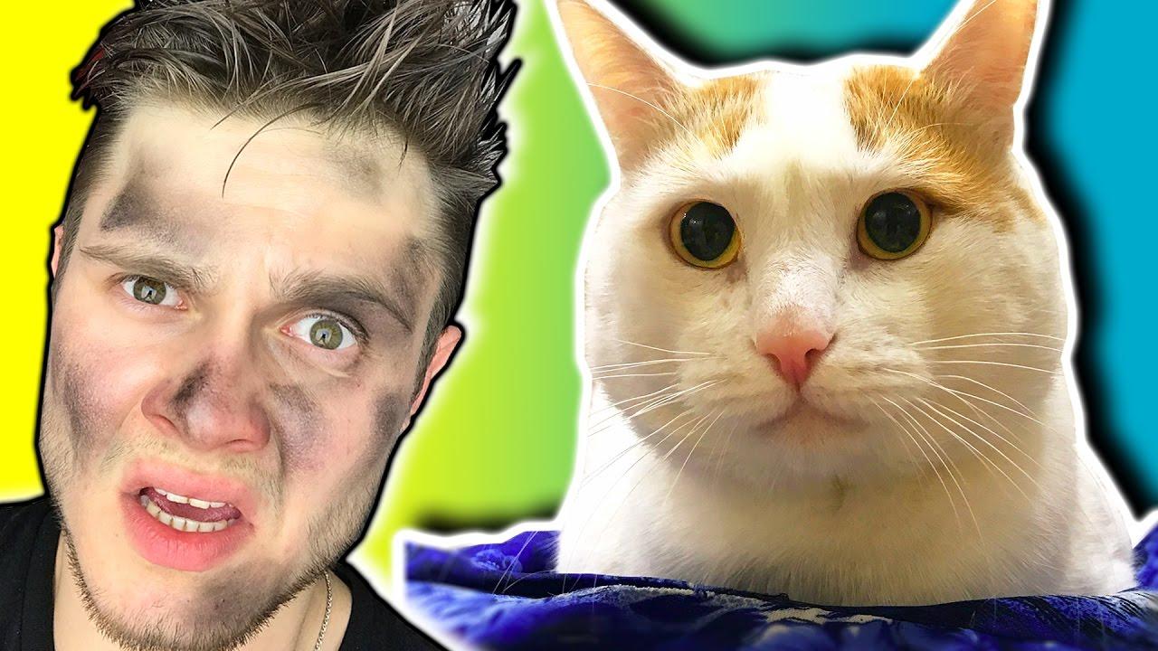 Кот и кошка игры для двоих