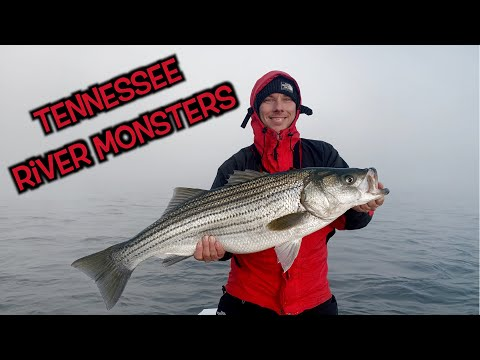 Catching River Monsters Below Watts Bar Dam In Tennessee!