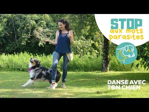 5 erreurs à éviter quand on fait du dog dancing - Danse avec ton chien