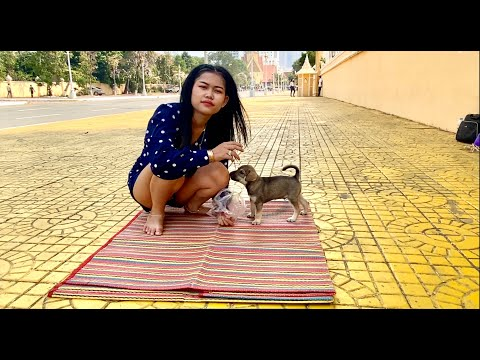 How to feeds and play shown by beautiful girl with smart dog while sightseeing