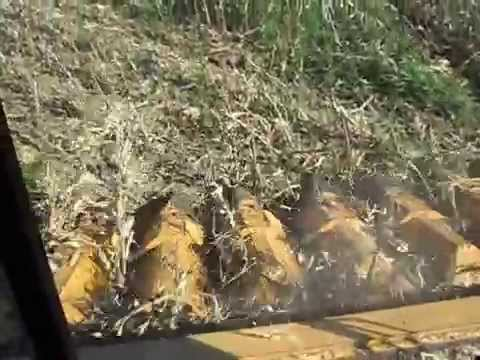 colhedeira 57 piraju