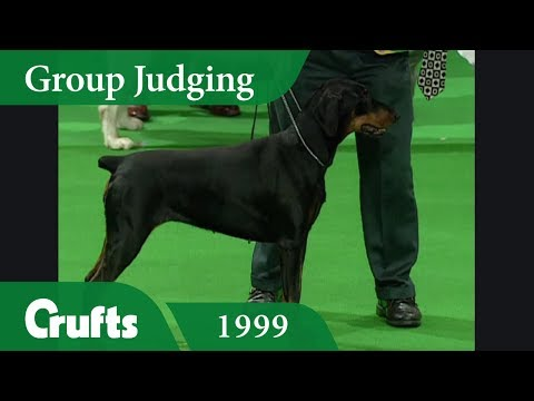 Doberman wins Working Group Judging at Crufts 1999