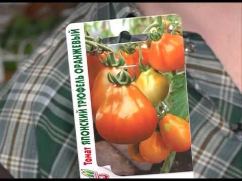 Батяня томат описание, выращивание и высадка рассады