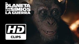 El Planeta de los simios: La Guerra | Clip Simio Malo subtitulado | Próximamente - Solo en cines