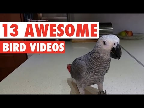 13 Funny Bird Videos