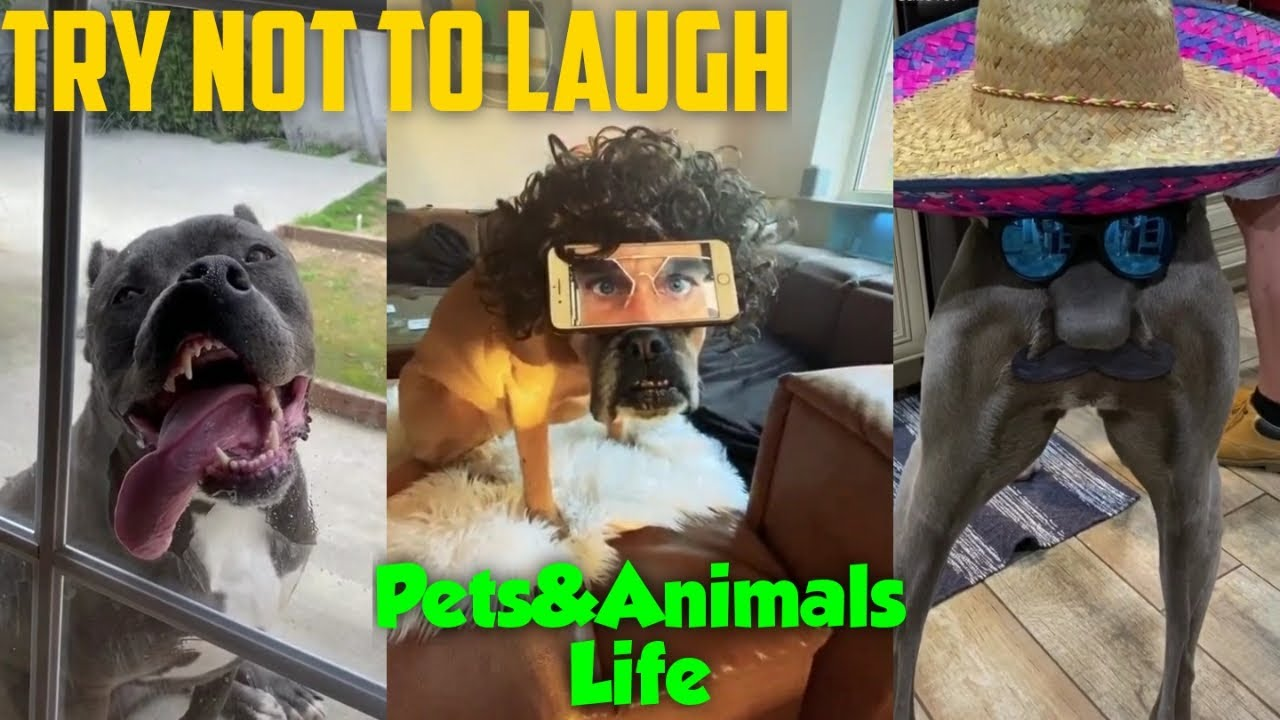 Try Not To Laugh 6 - Pets&Animals Life❤