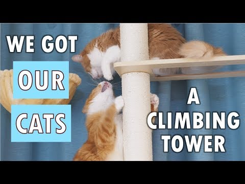 We Got Our Cats A Climbing Tower