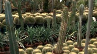 Hobi Bahçecilik - Kaktüs ve Sukulent Bitkisi Çoğaltımı ve Bakımı