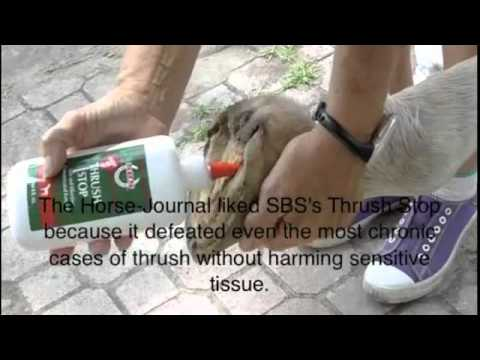 How to Protect & Treat Against Severe Thrush