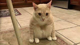 ПРИКОЛЫ С ЖИВОТНЫМИ 😺🐶 Смешные Животные Собаки Смешные Коты Приколы с котами Забавные Животные #136