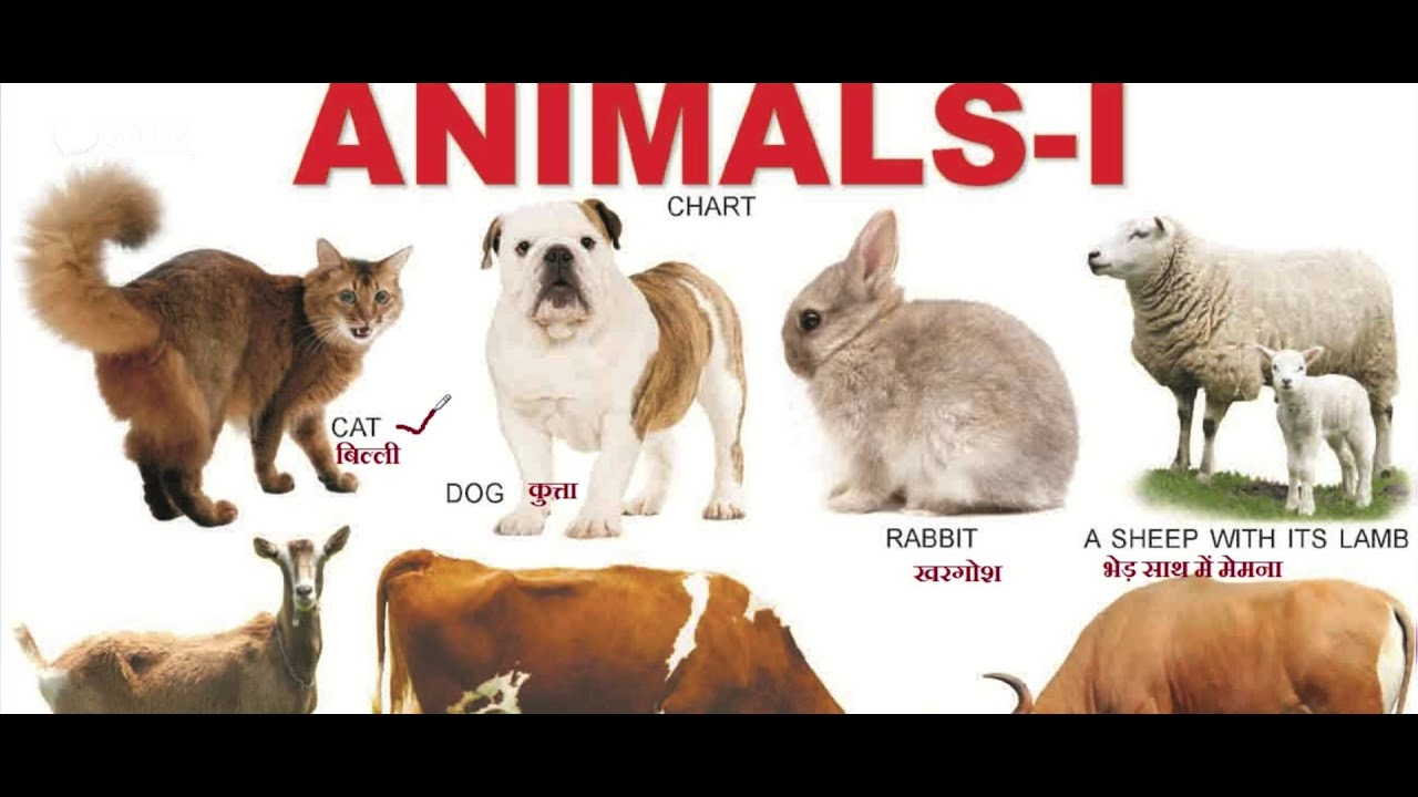 Animals Name For Kids Children Baby Study Video 1 In