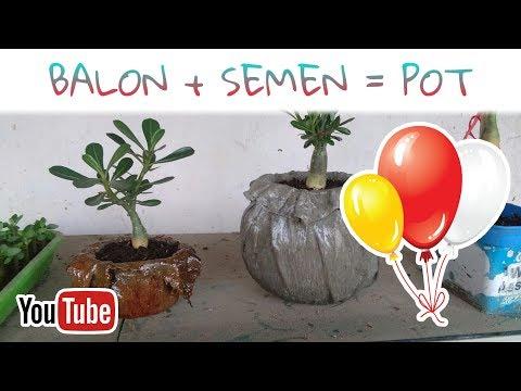 Membuat Pot Adenium dari Balon + Semen