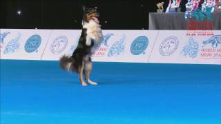 FCI Dog dance World Championship 2016 – Freestyle final  - Lisette Olausson and Gaston (Sweden)