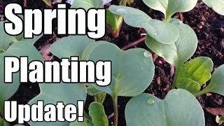 Spring Planting Update & Planting Cool Weather Crops Without Protection (4/2 - Zone 5)
