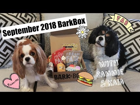Cavalier King Charles Spaniel | BarkBox Unboxing | September 2018 | with Sammie & Kaia | #BarkBoxDay