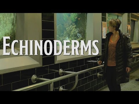ECHINODERMS  short film  Panasonic G7
