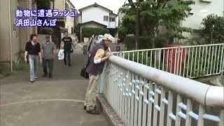2010年7月20日 ちい散歩 浜田山 thumbnail