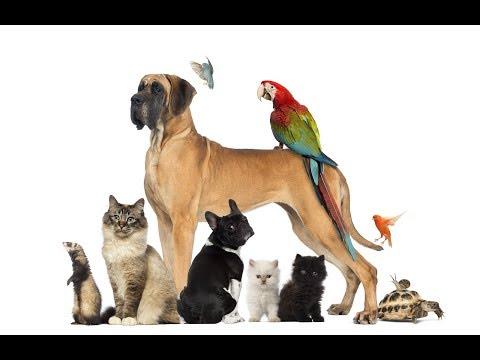 Животные и птицы на моих картинах.