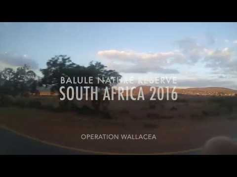 SUMMER 2016 | Balule Nature Reserve, South Africa (Operation Wallacea Research Expedition)