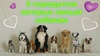 5 продуктов которые нельзя собакам