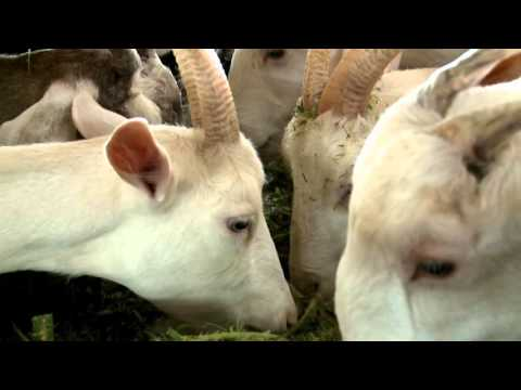 Mineral Cycle Conservation in Goat Farm
