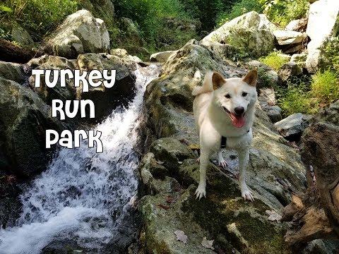 Turkey Run Park with Wolfie and Katniss