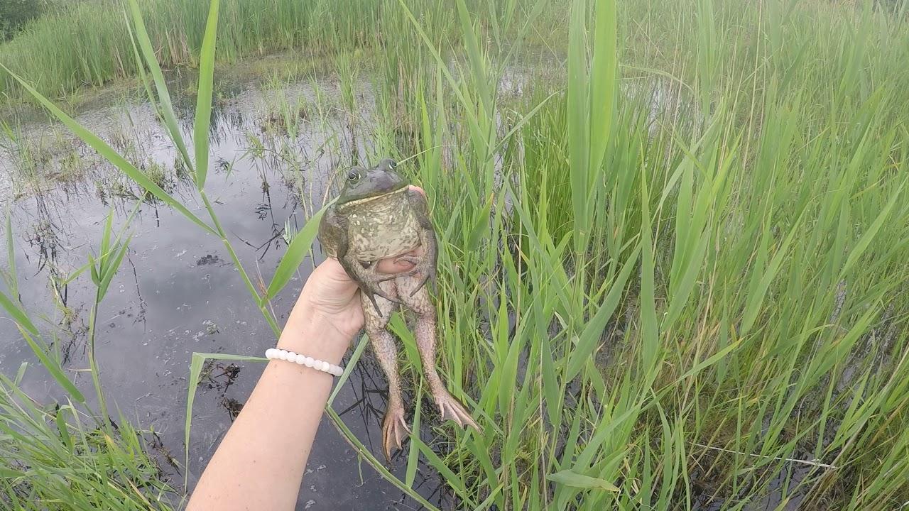 Week 3: Cat or Frog – Wildlife Epidemiology Laboratory