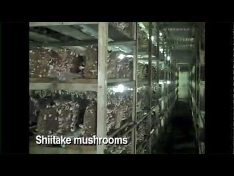 Phillips Mushroom Farms in Kennett Square