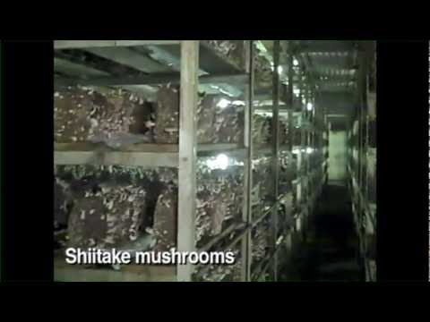 Phillips Mushroom Farms in Kennett Square
