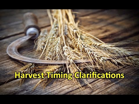 Harvest Timing Clarifications - George Tabac