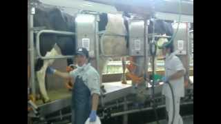 Hasegai Dairy Farm