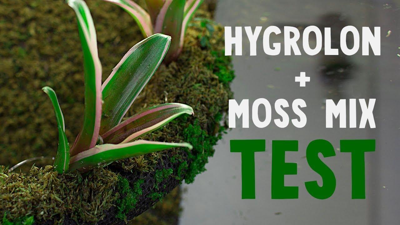 test hygrolon et moss mix pour faire pousser de la mousse youtube. Black Bedroom Furniture Sets. Home Design Ideas