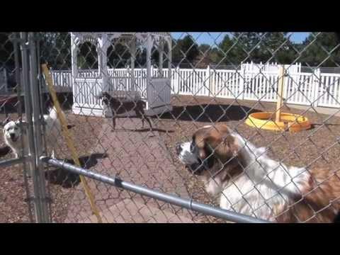 Tenaker Pet Care Center - Denver Metro - Aurora, Colorado