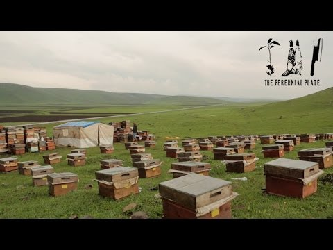 Kars Honey | The Perennial Plate's Real Food World Tour