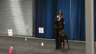 Halifax Kennel Club - Rally Novice A - Doberman Pinscher