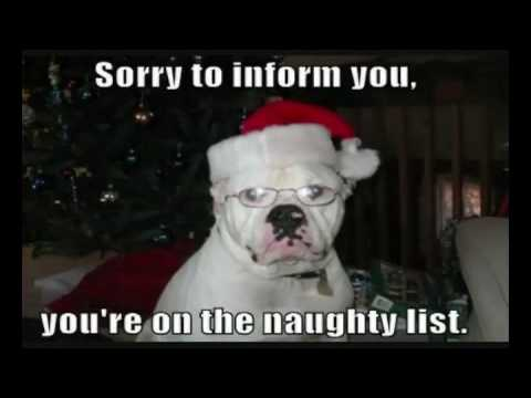 worlds funniest dogs christmas edition
