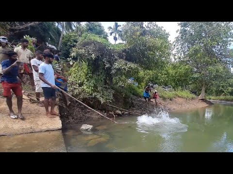 Crocodile Hunting Videos 🇱🇰 | Sri lanka