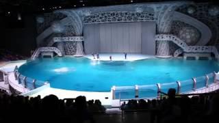 Москвариум. Шоу с дельфинами