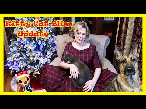 Kitty Cat Bliss Update Meesha Bella and Cassie the German Shepherd