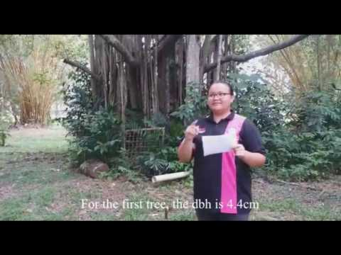 FHP3105 Forest Silviculture G5 at Ladang Karas Hulu Langat: Ep 2 (The Growth Performance)