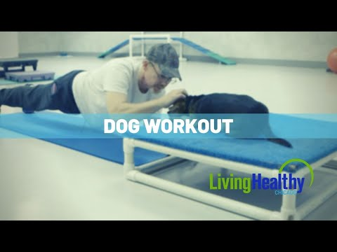 Working Out With Your Dog | Living Healthy Chicago