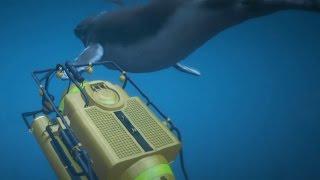 ボツ【GTA5リクエスト編】クジラが無敵すぎる!!(クジラを陸に上げる企画始動) thumbnail