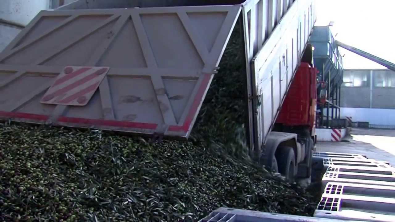 clemente snc macchine olearie impianto di stoccaggio e pulizia olive FRANTOIO SAN NICOLA CORATO (BA)