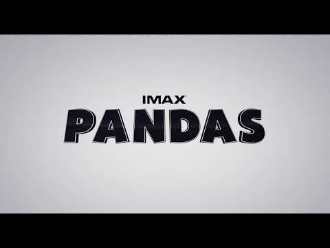 Pandas Opens Friday, April 20, in IMAX at TELUS World of Science - Edmonton