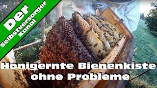 Honigernte Bienenkiste ohne Probleme
